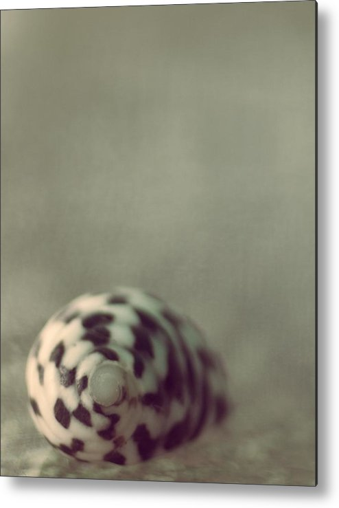 Seashell Metal Print featuring the photograph Solitaria by The Art Of Marilyn Ridoutt-Greene