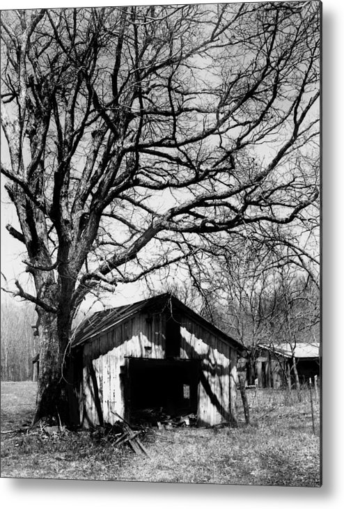 Ansel Adams Metal Print featuring the photograph Tree-hut by Curtis J Neeley Jr