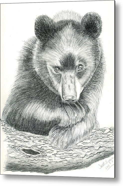 Black Bear Metal Print featuring the drawing Where by Joette Snyder
