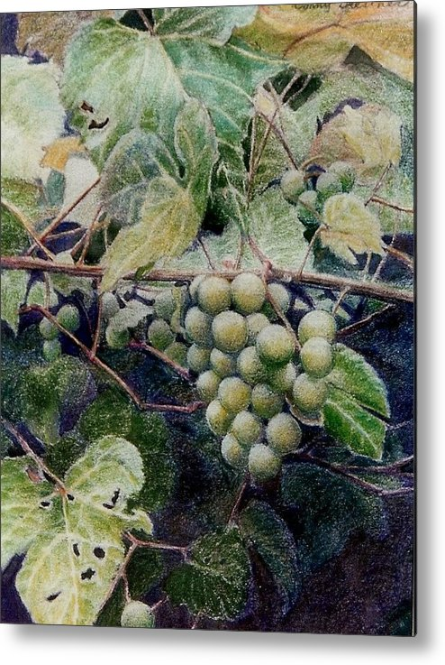 Green Metal Print featuring the painting Wild Grapes by Constance Drescher