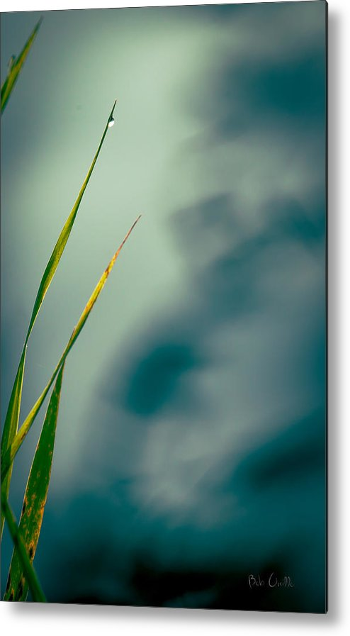 Grass Metal Print featuring the photograph Dew Drop by Bob Orsillo