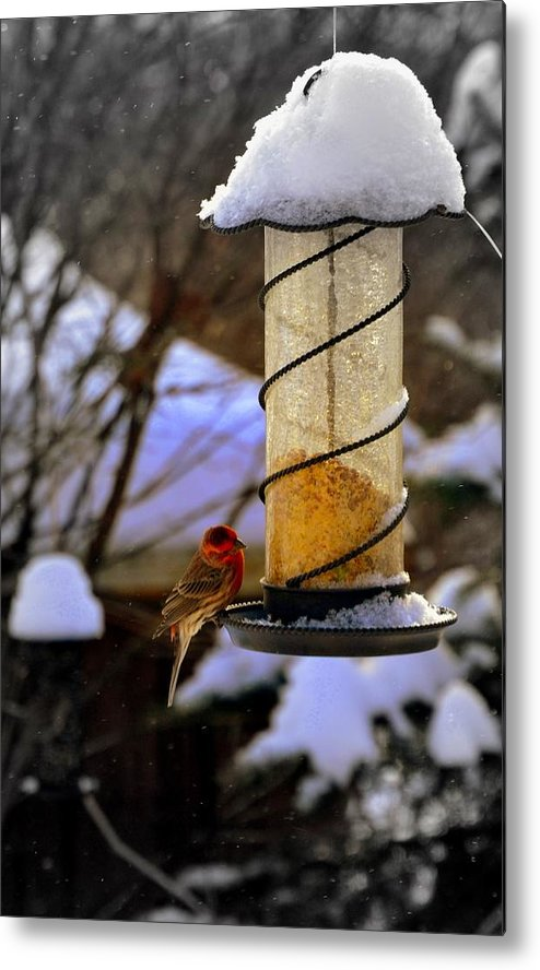Bird Metal Print featuring the photograph Frozen Feeder And Disappointment by Zafer Gurel