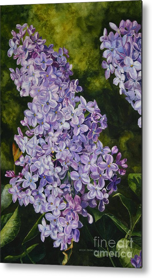 Lilacs Metal Print featuring the painting Lavender Lilacs by Helen Shideler