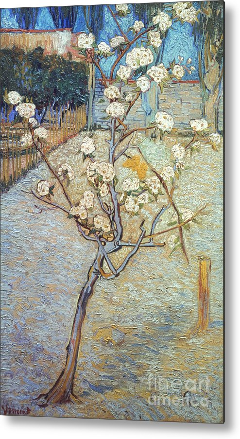 1888 Metal Print featuring the photograph Van Gogh: Peartree, 1888 by Granger