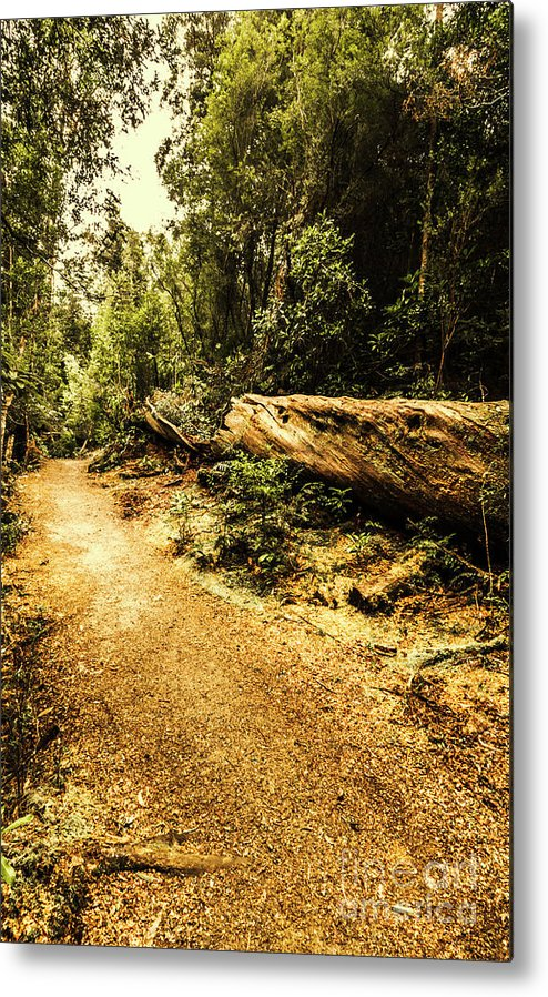 Log Metal Print featuring the photograph Woodland Nature Walk by Jorgo Photography - Wall Art Gallery