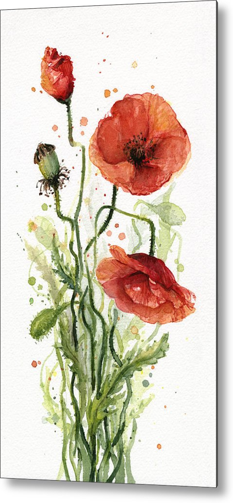 Red Poppy Metal Print featuring the painting Red Poppies Watercolor by Olga Shvartsur