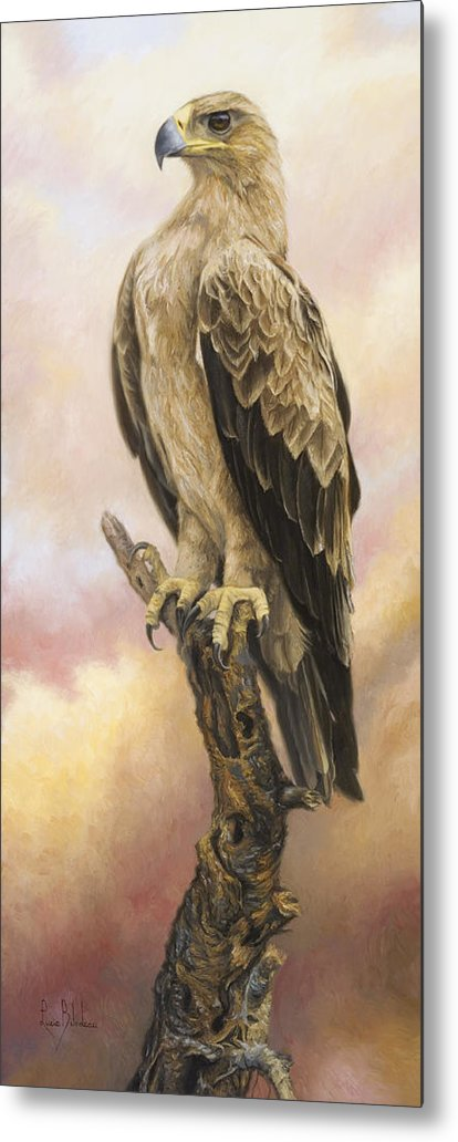 Tawny Eagle Metal Print featuring the painting Tawny Eagle by Lucie Bilodeau
