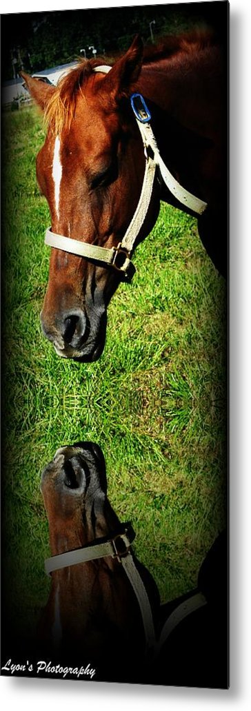 Horse Metal Print featuring the photograph Who Are You by Desiree Lyon