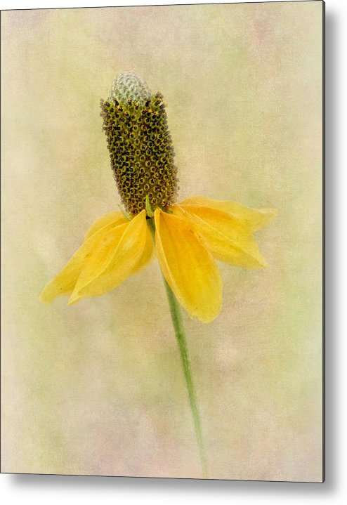 Botany Metal Print featuring the photograph Standing Proud by David and Carol Kelly