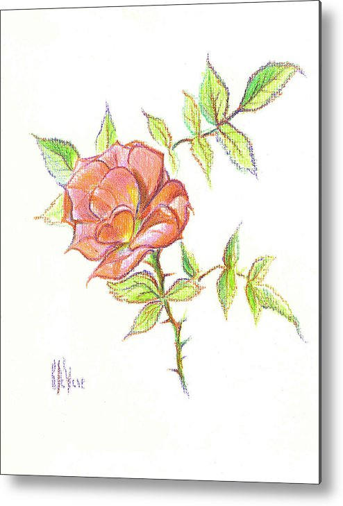 A Rose In Brigadoon Metal Print featuring the drawing A Rose In Brigadoon by Kip DeVore