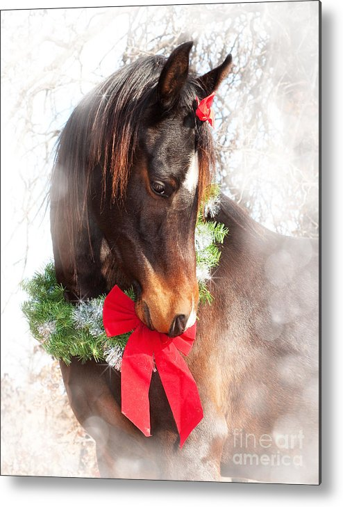 Cute Metal Print featuring the photograph Gift Horse by Sari ONeal