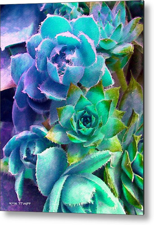 Hens And Chicks Photography Metal Print featuring the photograph Hens And Chicks Series - Deck Blues by Moon Stumpp