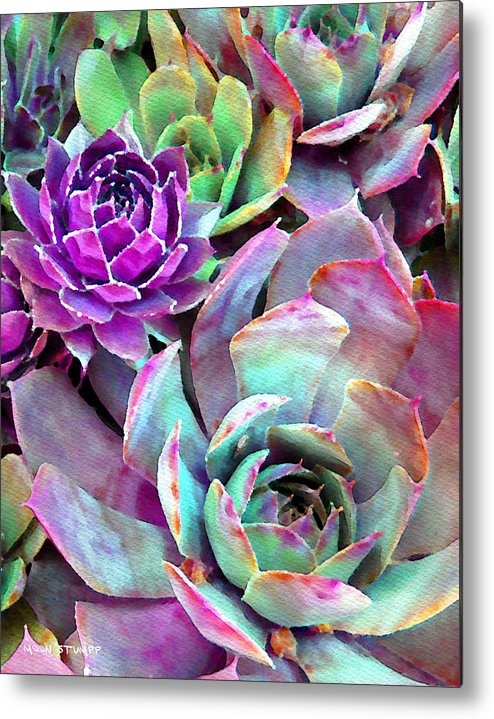 Hens And Chicks Photography Metal Print featuring the photograph Hens And Chicks Series - Urban Rose by Moon Stumpp