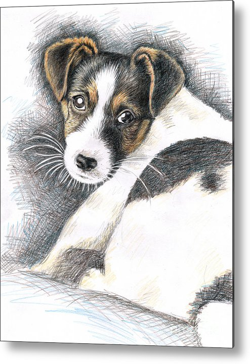 Dog Metal Print featuring the drawing Jack Russell Puppy by Nicole Zeug
