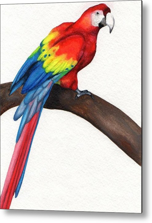 Parrot; Watercolor Metal Print featuring the painting Parrot by Stephanie Arbore