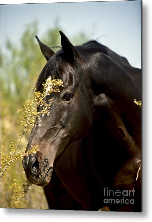 Horse Metal Print featuring the photograph Portrait Of A Thoroughbred by Kathy McClure