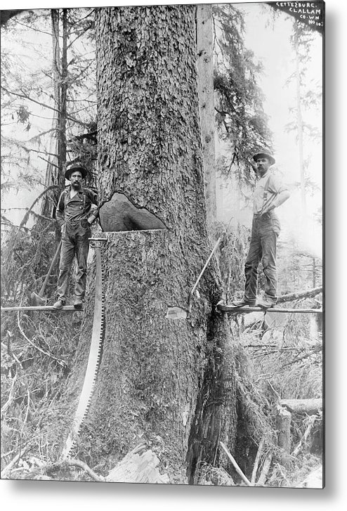 Human Metal Print featuring the photograph Us Forestry by Library Of Congress