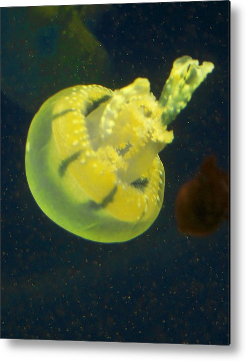 Jellyfish Metal Print featuring the photograph Green Jellyfish by Diana Cox
