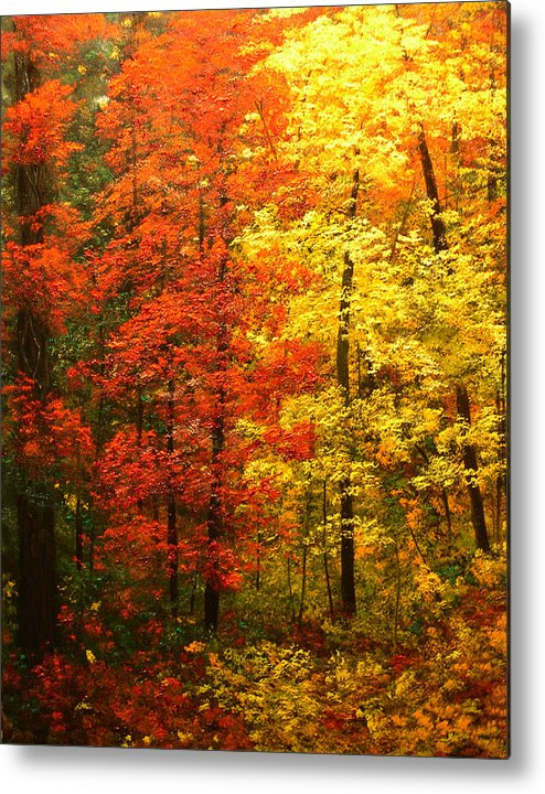 Oil Painting Metal Print featuring the painting Colors Of Autumn II by Connie Tom