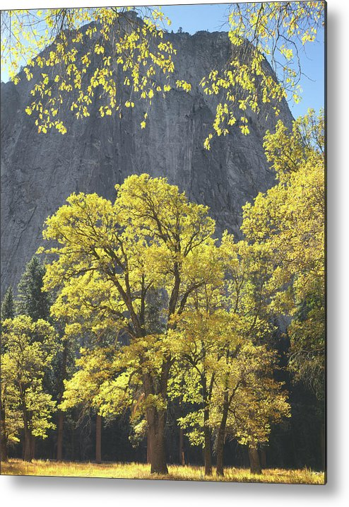 1m6610 Metal Print featuring the photograph 1m6610 Middle Cathedral Rock In Autumn by Ed Cooper Photography