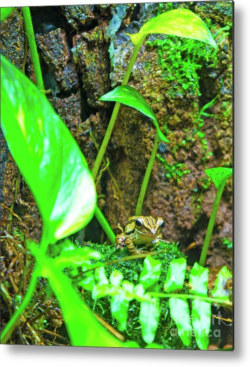 Frog Metal Print featuring the photograph A Paparazzi Shot At The Frog by Marie Loh