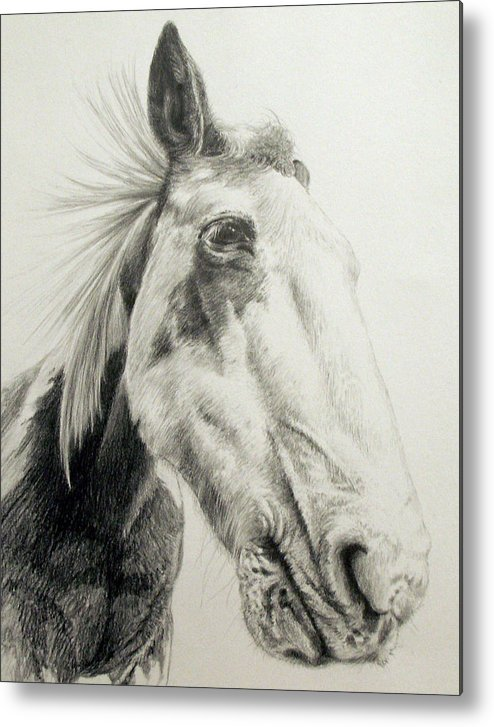 American Paint Horse Metal Print featuring the drawing American Paint Horse by Keran Sunaski Gilmore
