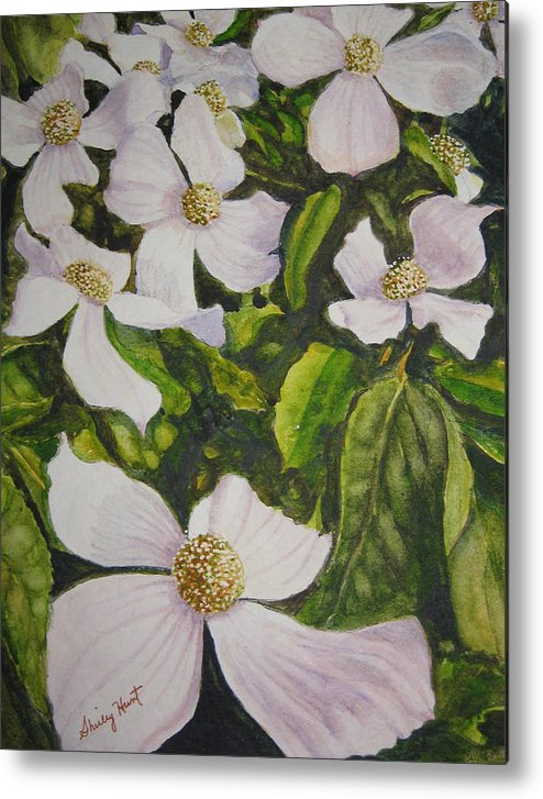 Landscape Metal Print featuring the painting Bc Dogwoods by Shirley Braithwaite Hunt