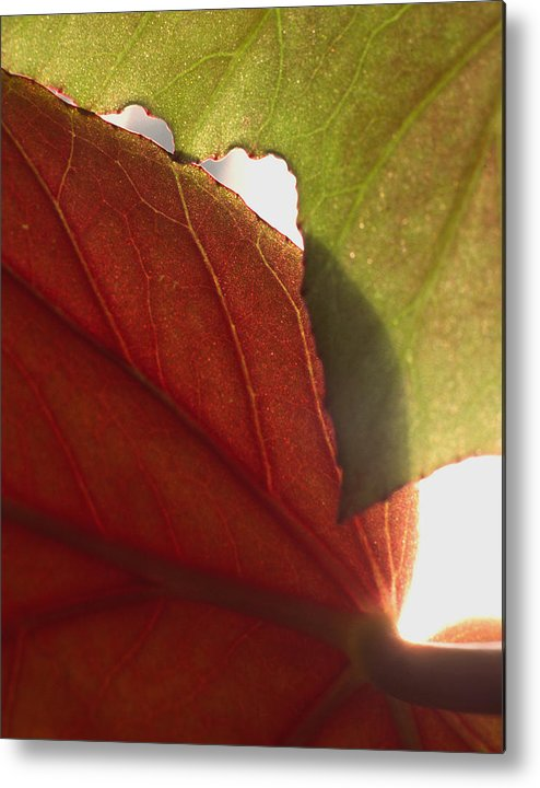 Floral Metal Print featuring the photograph Begonia 1 by Art Ferrier