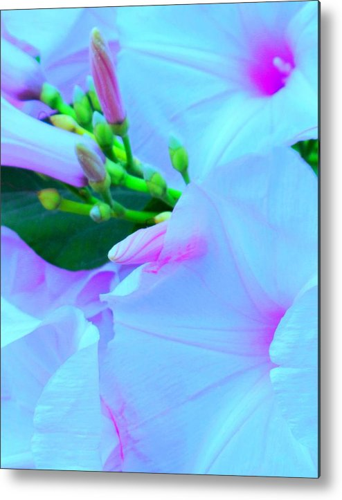 Blue Metal Print featuring the photograph Blue Beauty by Ian MacDonald