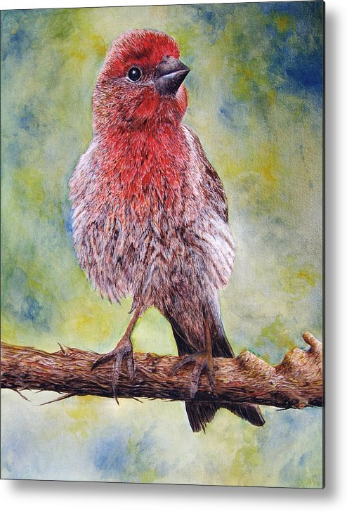 House Finch On Tree Branch Metal Print featuring the painting Finchy by JoLyn Holladay