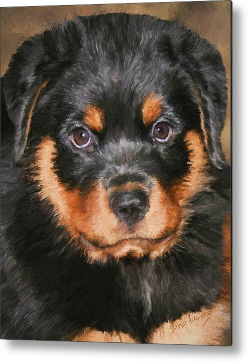 Rottweiler Metal Print featuring the painting Jacob by David Wagner