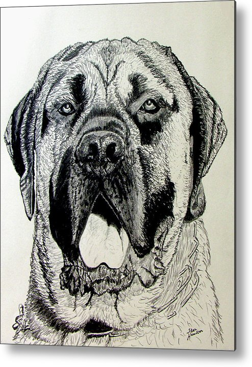 Mastiff Metal Print featuring the drawing Mastiff by Stan Hamilton