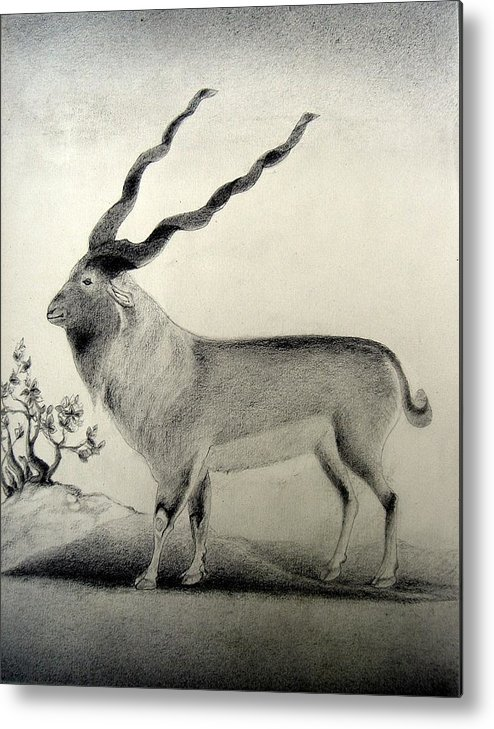Mughal Miniature Metal Print featuring the drawing Miniature Drawing Of Oryx by Caroline Urbania Naeem