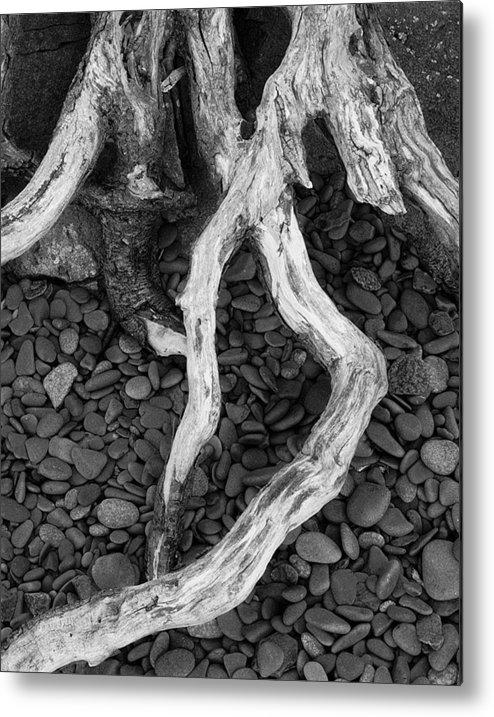 Landscape Metal Print featuring the photograph Roots by Abhishek Dasgupta