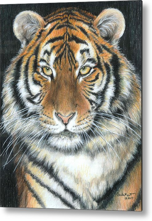 Tiger Metal Print featuring the drawing Songha by Carla Kurt