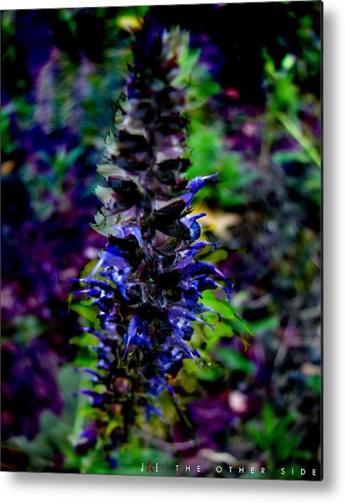 Flower Metal Print featuring the photograph The Other Side by Jonathan Ellis Keys