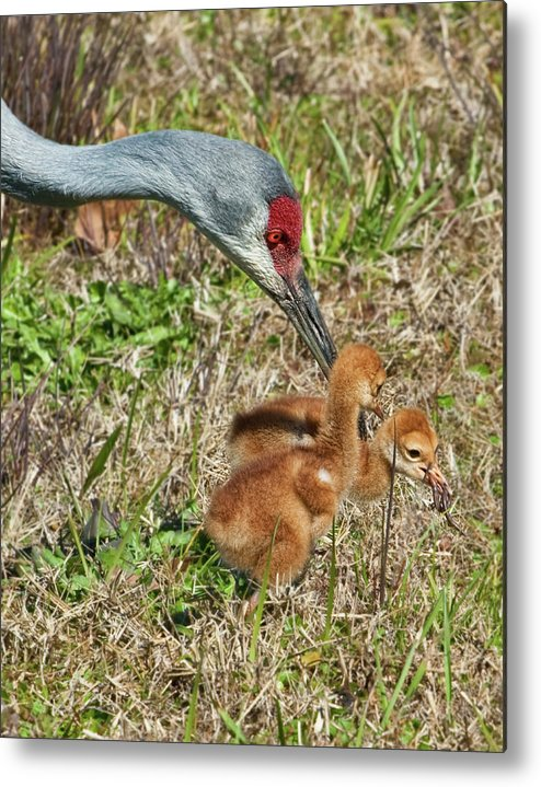Birds Metal Print featuring the photograph This Is What We Eat by Delores Knowles