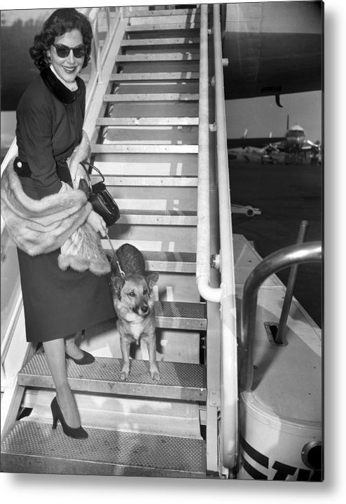 1950-1959 Metal Print featuring the photograph Actress Ava Gardner And Her Dog, Rags by New York Daily News Archive