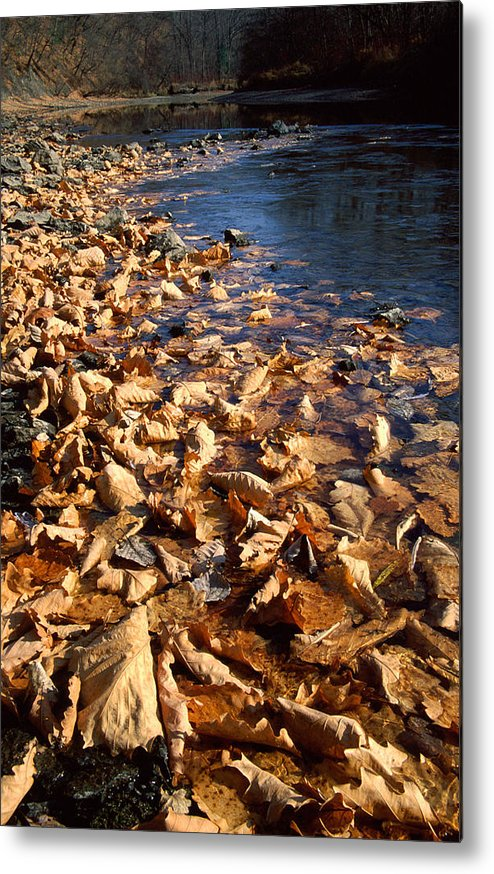 Autumn; Bank; Fall; Flora; Leaves; Nature; Nobody; Outdoors; Outside; Plant World; Plants; Seasons; Taiga; Water Metal Print featuring the photograph Ussurian Taiga Autumn by Anonymous