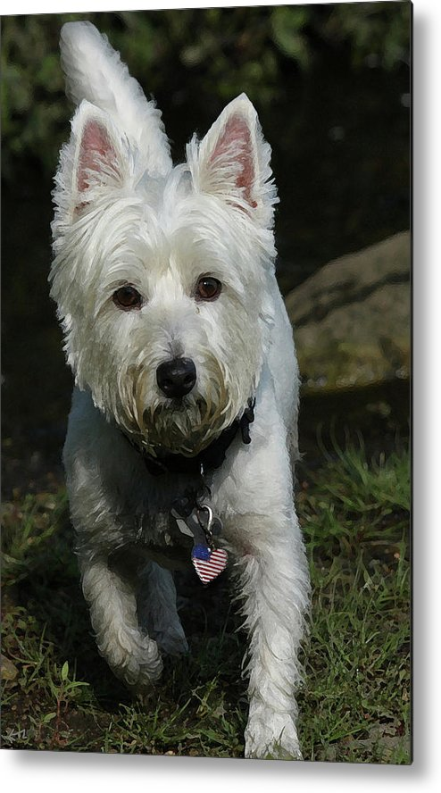 Dog Metal Print featuring the photograph Fuzzy by Karol Livote