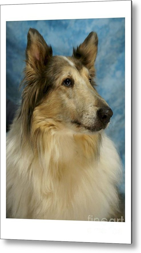 Collie Metal Print featuring the digital art Collie 812 by Larry Matthews