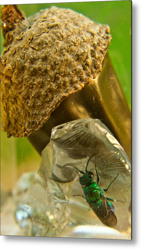 Wasp Metal Print featuring the photograph Halicid Wasp 5 by Douglas Barnett