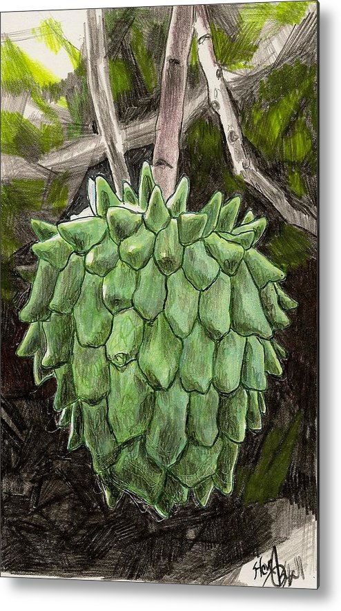 Fruit Metal Print featuring the drawing Rollinia by Steve Asbell