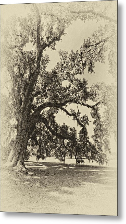 Evergreen Plantation Metal Print featuring the photograph Southern Comfort Sepia by Steve Harrington