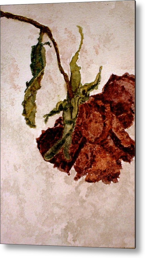 Rose Metal Print featuring the painting Alices Rose - Watercolor by Donna Hanna