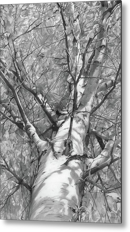 Graphicart Metal Print featuring the drawing Autumn Birch by Denis Chernov