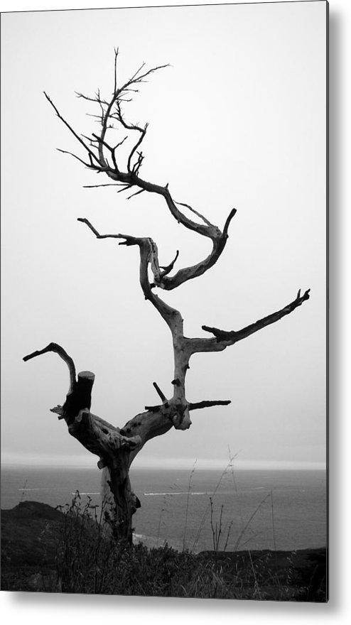 Tree Metal Print featuring the photograph Crooked Tree by Matt Hanson