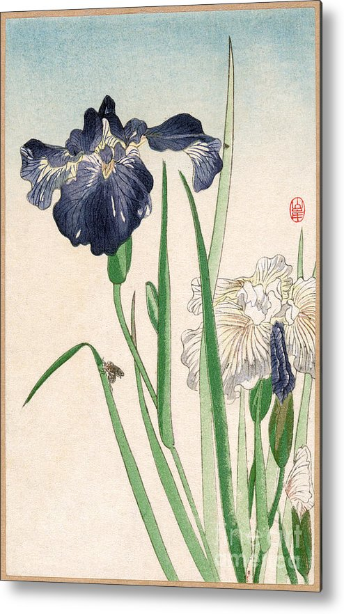 20th Century Metal Print featuring the photograph Japanese Irises by Granger