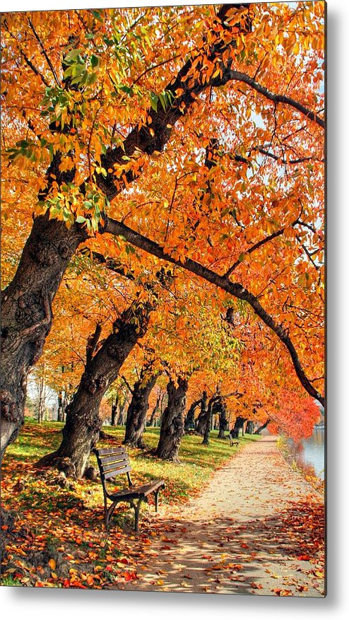 Autumn Metal Print featuring the photograph Mute Appeal by Mitch Cat