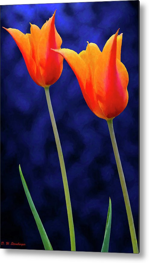 Tulips Metal Print featuring the photograph Two Orange Tulips On Blue by D W Steinbarger